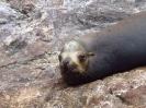 Rocio del Mar Liveaboard - August 2012